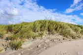 Noordzee duinen in de zomer — Stockfoto