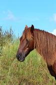 Um bonito cavalo — Foto Stock