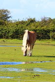 Pěkný kůň — Stock fotografie