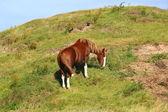 Ein hübsches pferd — Stockfoto
