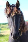 Un caballo muy — Foto de Stock
