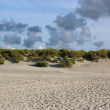 North Sea beach — Stockfoto