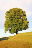 A beautiful tree — Stockfoto
