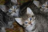 Cute little cat babies — Stock Photo