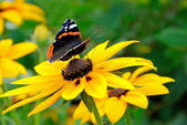 The butterfly on yellow flower — Stock Photo