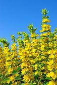 Yellow flowers — Стоковое фото