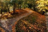 Autumn in Tallinn — Stock Photo