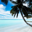 Stock Photo: Tropical beach in the Maldives.