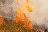 Brush Fire — Stock Photo