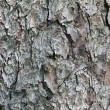 Pine tree bark textural background — Stock Photo #13424322