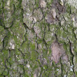 Pine tree bark textural background — Stock Photo #13424384
