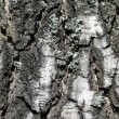 Birch tree bark textural background — Stock Photo #13424403