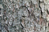 Pine tree bark textural background — Stock Photo