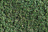 Seamless green grass background — Stock Photo