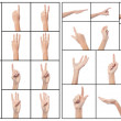Stock Photo: Collage of woman hands, various gestures.