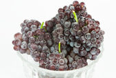 Champagne grapes — Stock Photo