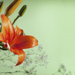Stock Photo: Orange lilly