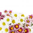 Flower border — Stock Photo