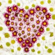 Heart of flower — Stock Photo