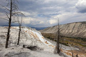 Mammoth Hot Springs, Yellowstone NP — Stock Photo