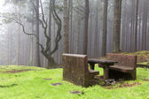 Forest in the mist, Madeira, Portugal — Stock Photo