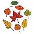 Stock Vector: Autumn leafs set