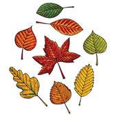 Autumn leafs set — Stock Vector