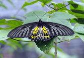 Thai butterflies 1 — Stock Photo