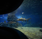 Shark in aquarium — Stock Photo