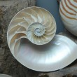 Stock photograph of a Half Shell Nautilus pompilius — Stock Photo