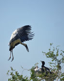 Stork family on the nest — Stock Photo