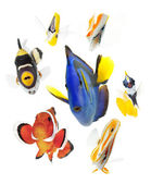 Fish, reef fish, marine fish party isolated — Stock Photo