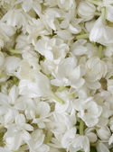 White flowers petal — Stock Photo