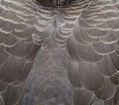 Eagle feather — Stockfoto