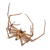 Dead spider — Stock Photo