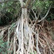 Foto Stock: Root of tree