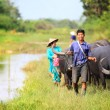 Asian female farmer taking care of a herd of water buffalos and cows — Stock Photo #19509969