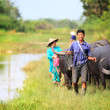 Asian female farmer taking care of a herd of water buffalos and cows - Stock Photo