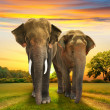 Stock Photo: Elephants family on sunset