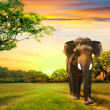 Stock Photo: Elephant on sunset