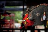 Pokaż słoń — Zdjęcie stockowe