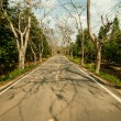 Country road with trees along — Stockfoto