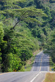Beautiful road with tamarind trees in thailand, countryside road — Stock Photo