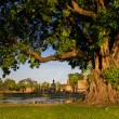 Braided roots of large banyan tree in Sukhothai Historical Park, Thailand — Stock Photo #47735297