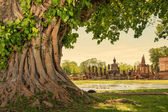 Braided roots of large banyan tree in Sukhothai Historical Park, Thailand — Stock Photo
