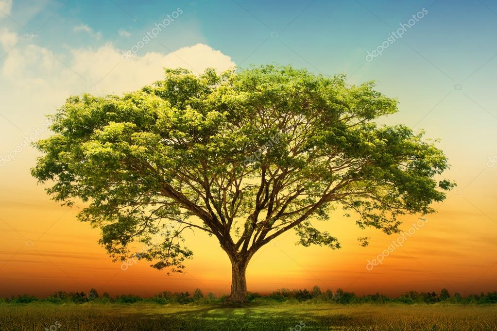 Фотообои Зеленый природа дерево пейзаж
