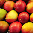 Mango background — Stock Photo