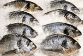 Bream(dorade) on ice at the seafood booth — Stock Photo