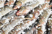 Fresh fishes in market — Stock Photo
