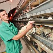 Chicken farm — Stock Photo #30434471